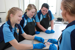 Four female students with blue gloves standing at desk doing experiment.